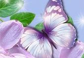 Mignon papillon