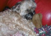 Fanny dort avec son