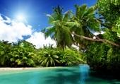 Puzzle Tropique