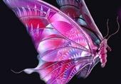 Puzzle Papillon rose