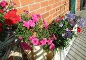 Jardinières sur balcon