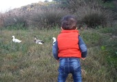 Manil chasseur de canards