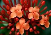 Eclosion de fleurs