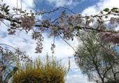 printemps dans le jardin