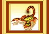 Scorpion marron