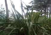 L'île de Batz et son micro climat.