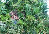 Jardin tropical sous serre