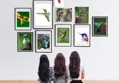 Colibris expo