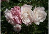 Journée fleurs