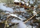 Branche enneigé