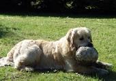 chien jouant au ballon