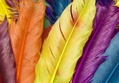 des plumes