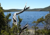 Cove lake en Tasmanie
