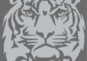 Tigre gris