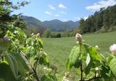 les promesses de la nature au printemps