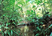 AMAZONIE SAUVAGE
