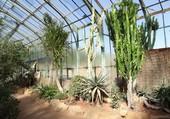 Parc de la Tête d'Or à Lyon - Les cactus