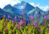 En Haute Savoie