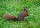 petit écureuil de mon jardin