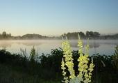 Brume matinale sur un étang.