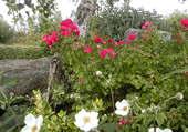 La beauté faite fleurs