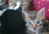 Chloé et ses chatons