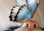 un papillon sir le museau de mon chat