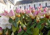 fleurs en Normandie