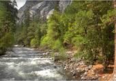 l'eau dans la forêt
