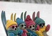 Oursons aux sports d'hiver