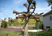 Puzzle Un drôle d'arbre