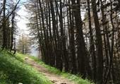 Puzzle Sentier ds un sous bois