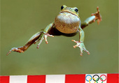 Grenouille olympique :)