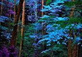 Féérie en forêt