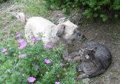 Grisouille et Fanny au jardin