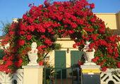 roses à Estartit