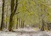 Derniére neige