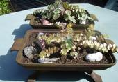 jardinières de sédums