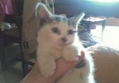 ma petite chatte Cerise