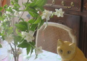 chat et fleurs