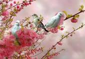 Bel oiseau sur fleur de printemps