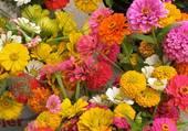 fleurs aux couleurs variées