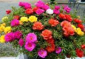 jardinière colorée