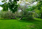 Puzzle parc de Maisonneuve au printemps