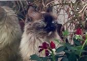 une jolie petite chatte