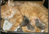 Minette adopete des hérissons bb