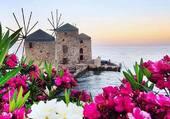 Moulin et fleurs