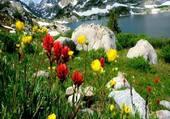 Les fleurs du bord du lac