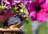 L'oiseau et le pétunia