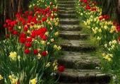 Randonnée dans les tulipes